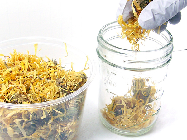 filling jar with calendula
